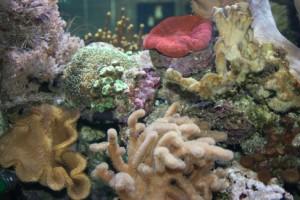 Diverse Korallen 2