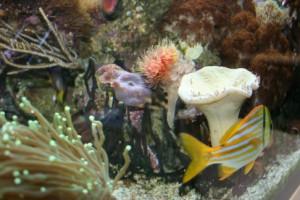 Diverse Korallen 3